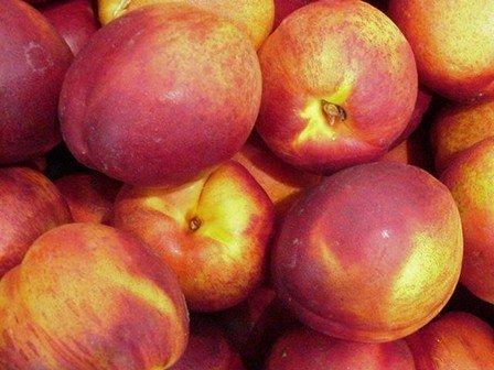 Nectarine Red Gold - PB12/18