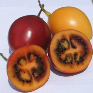 Tamarillo red - 2Ltr (40/50)