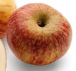 Apple Altländer Pfannkuchenapfel