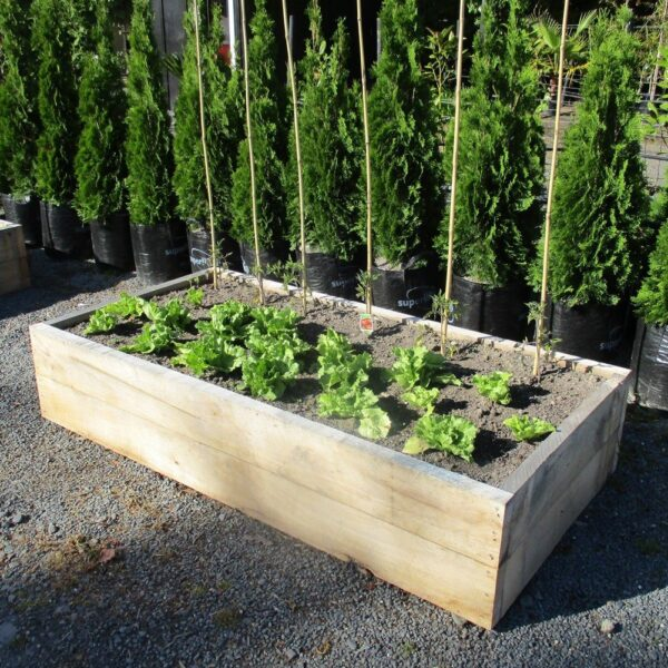 Macrocarpa Raised Bed Kitset