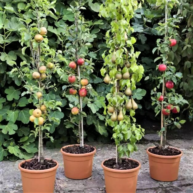 Our Top recommendations for Fruit Trees